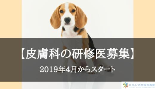 【獣医師向け】皮膚科の研修医を募集!