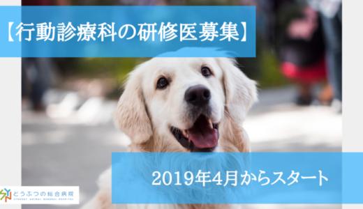 【獣医師向け】行動診療科の研修医を募集!