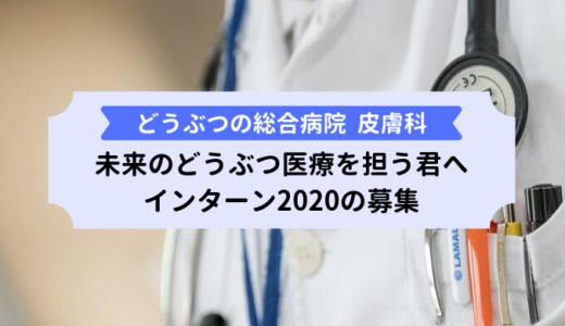 どうぶつの総合病院『皮膚科』学生インターン2020の募集