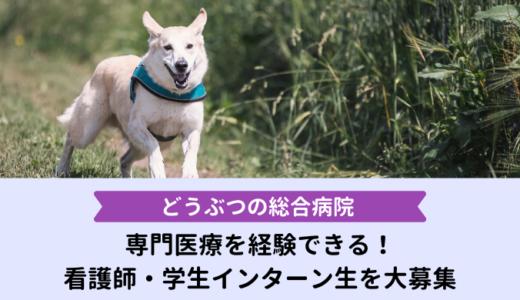 動物看護師・学生のインターン生を大募集!